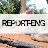 report-eng